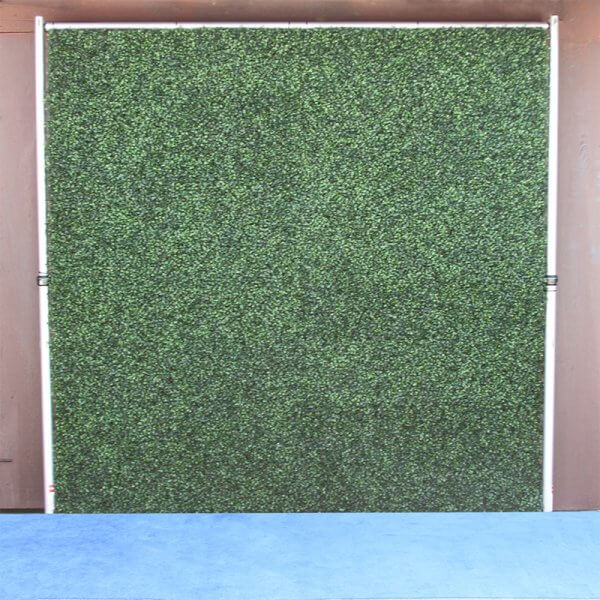 8 by 8 foot Hedge Roll backdrop with light blue carpet