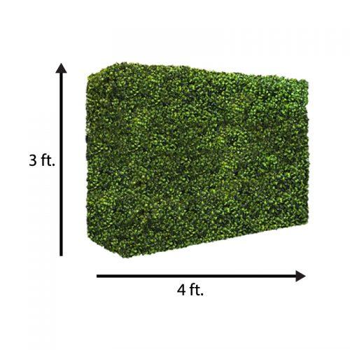 3x4 hedge wall