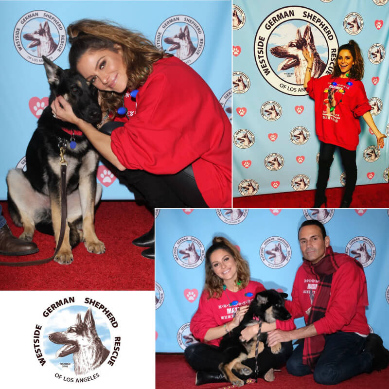 We printed this 8' x 8' non-glare fabric step and repeat backdrop for Westside German Shepherd Rescue.